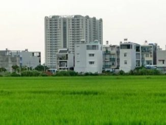 Người dân ở 11 quận, huyện ở TP.HCM được chuyển đổi mục đích đất trồng lúa